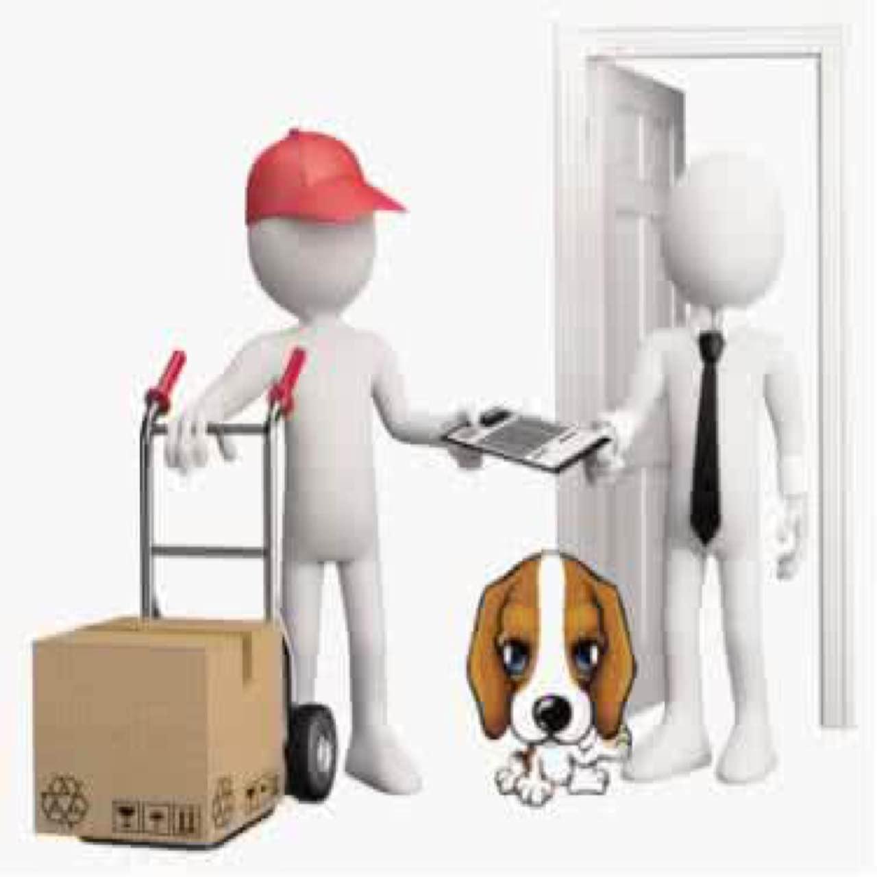 国内宠物托运 宠物空运 专业安全